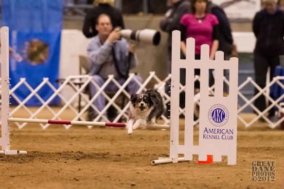 AKC Nationals 2012Courtesy of Great Dane Photos